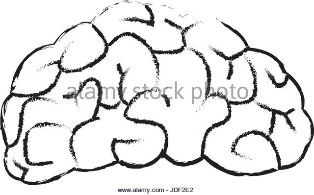640x398 Brain Drawing Stock Photos Amp Brain Drawing Stock Images
