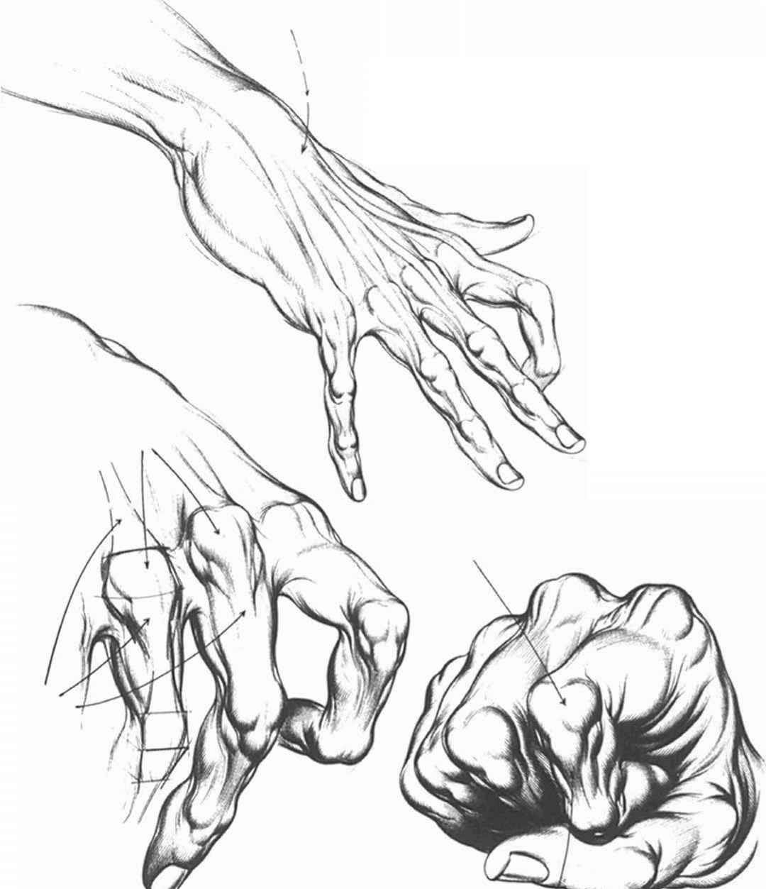 1080x1253 How To Draw Hands