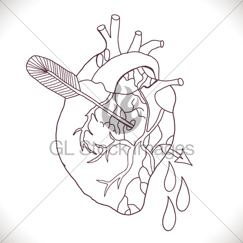 500x500 Anatomical Heart With Arrow Gl Stock Images