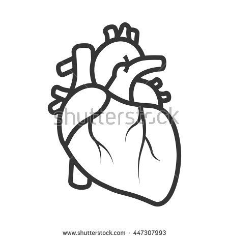 450x470 New Anatomical Heart Clipart