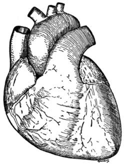 250x331 Real Heart Drawings