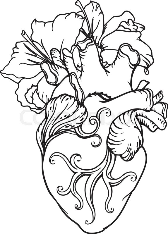 574x800 Stylized Anatomical Human Heart Drawing. Heart With White Lilies
