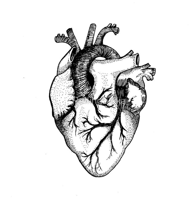 786x800 Anatomical Heart Art Prints By Rollingsuika Redbubble