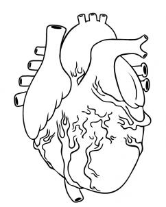 242x302 How To Draw A Human Heart Images For Quilt Projects