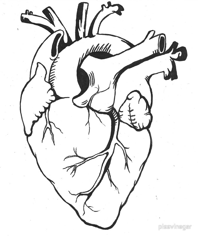 Anatomical Heart Line Drawing at GetDrawings.com | Free for personal ...