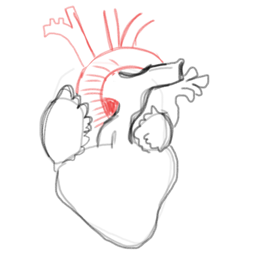 500x500 Drawing A Blank Anatomical Heart Number One With A Bullet
