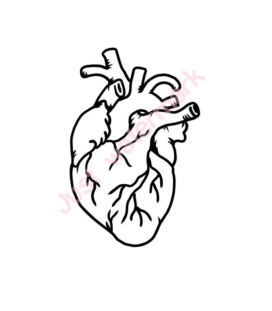 896x1024 570 Svgjpg Human Heart Line Drawing