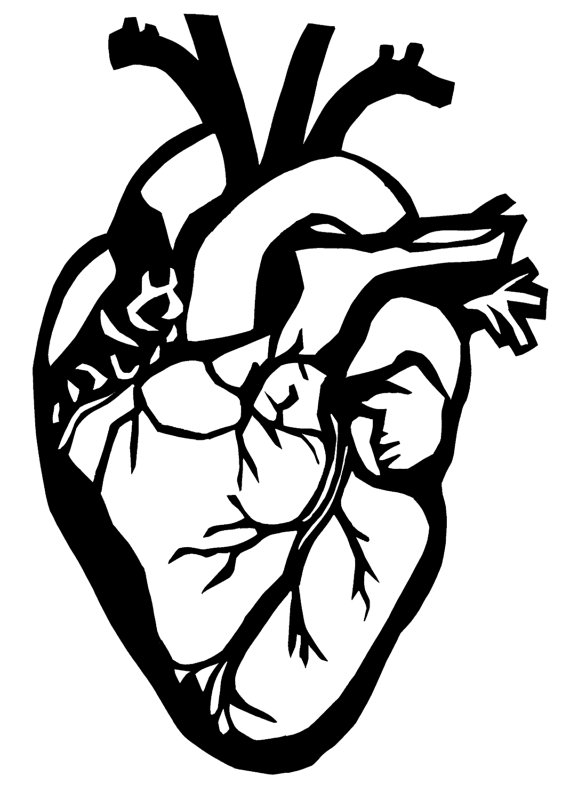 Anatomical Heart Line Drawing At Getdrawings Free For Personal