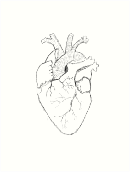 413x549 Anatomical Heart Sketch Art Prints By Thetomlinsons Redbubble