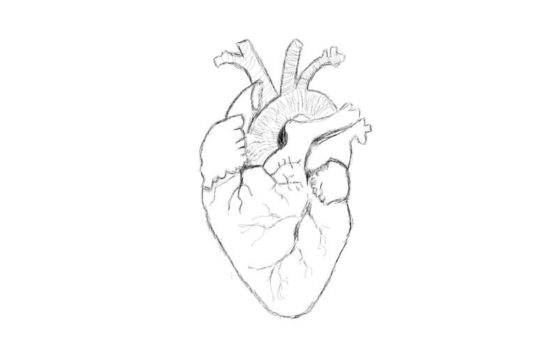 800x522 Anatomical Heart Sketch Laptop Skins By Thetomlinsons Redbubble