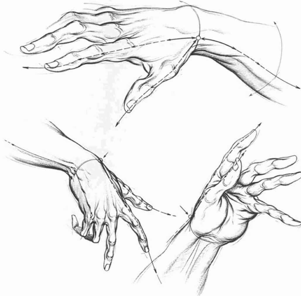 1029x1013 Drawing Hands Different Poses Drawing Hands How To Draw