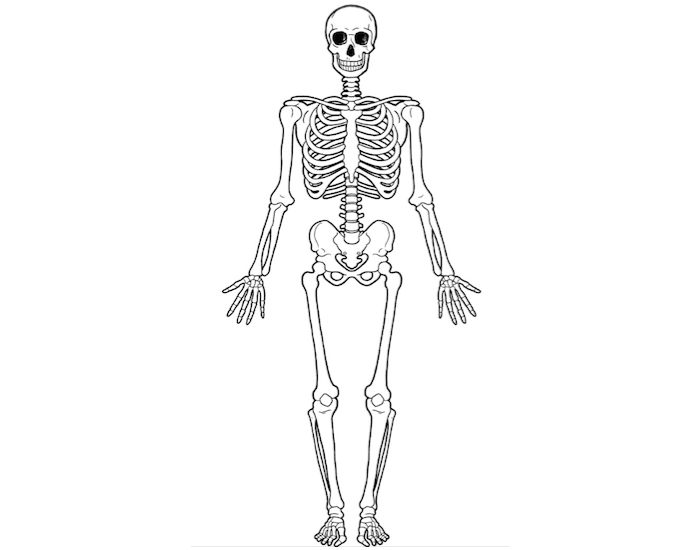 700x550 Anatomical Position Of Skeleton