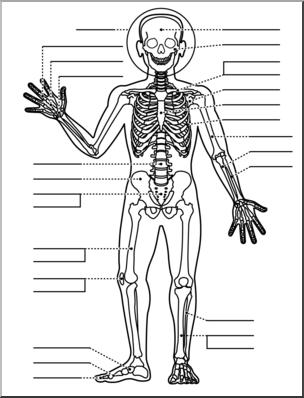 304x398 Clip Art Human Anatomy Skeletal System Bampw Unlabeled I Abcteach