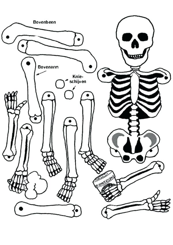 600x848 Human Skeleton Coloring Page All Human Bones In Human Anatomy
