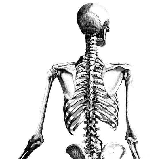 570x552 Human Skull Medical Illustration Poster Anatomy 05