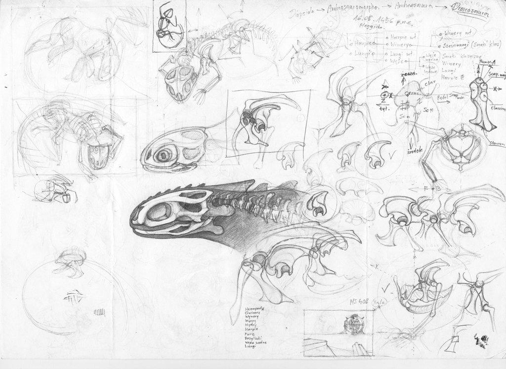 1024x746 Night Fury Anathomy Sketches By Dangref