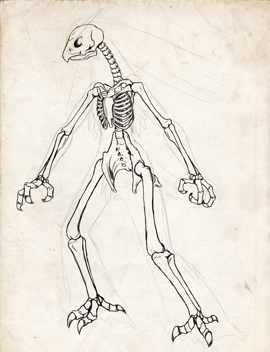 1024x1331 Pokemon Skeletons By Chibi Pika