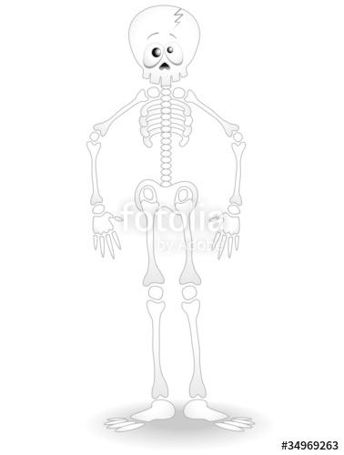 378x500 Scheletro Umano Cartoon Human Skeleton Anatomy Vector Stock Image