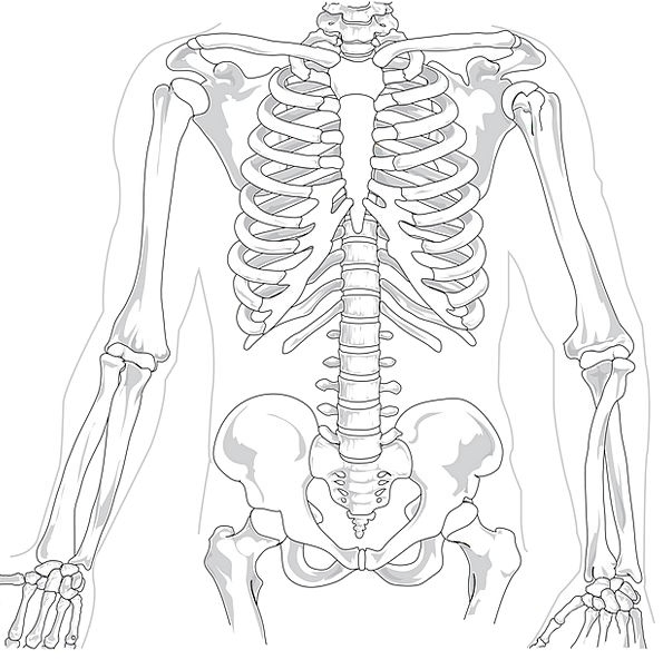 595x592 Spine Pixcove