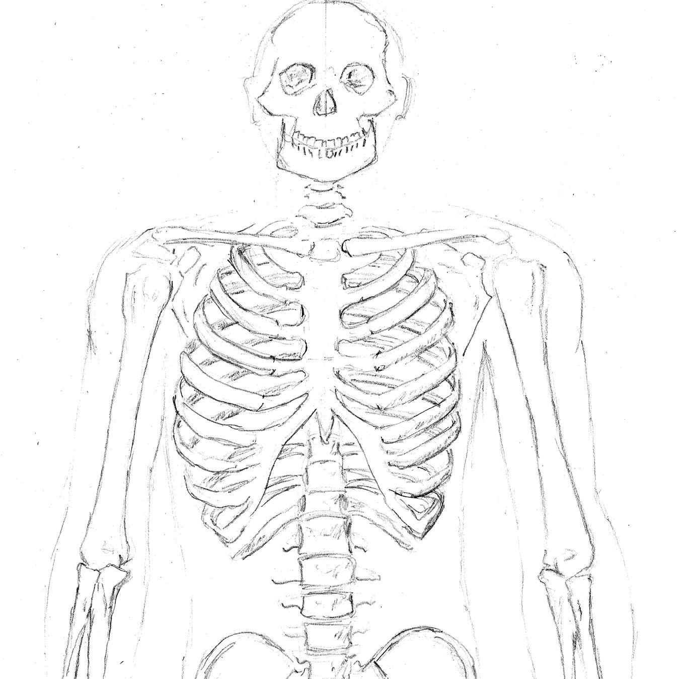 1345x1348 Skeleton Cropped John Pile Jr Sketchbook