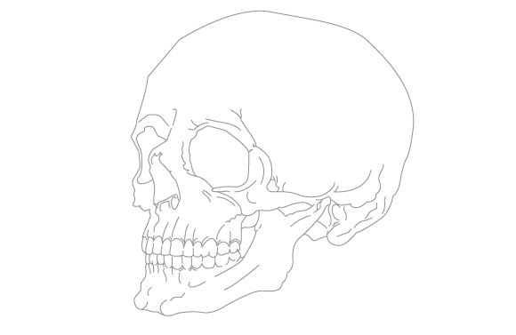 580x377 Free Human Anatomy Scientific Vector Set No Cost Royalty Free Stock