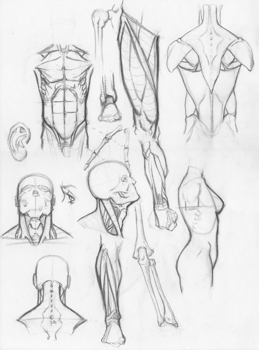 900x1215 Human Anatomy Sketches