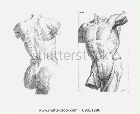450x366 Anatomy Drawings Of The Human Body