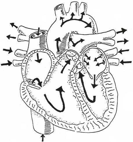 459x492 Cardiovascular Assessment