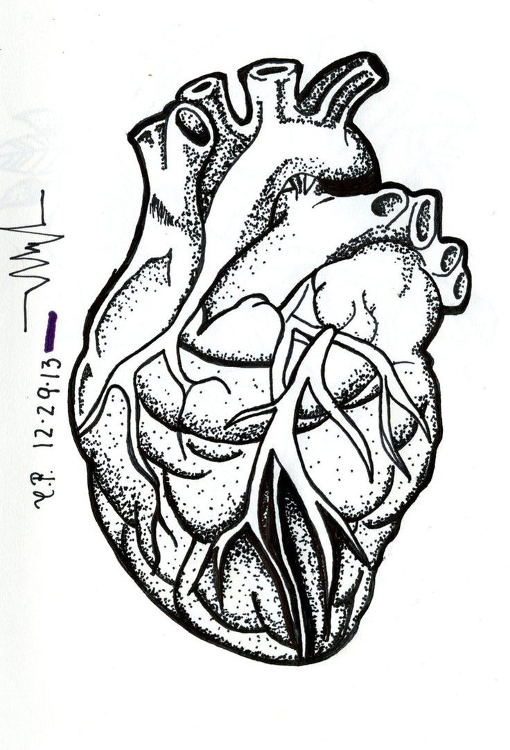 736x1081 Draw Human Heart With Names Best Anatomical Heart Drawing