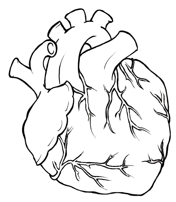736x845 Real Heart Hearts On Clipart Library Human Heart Tattoo