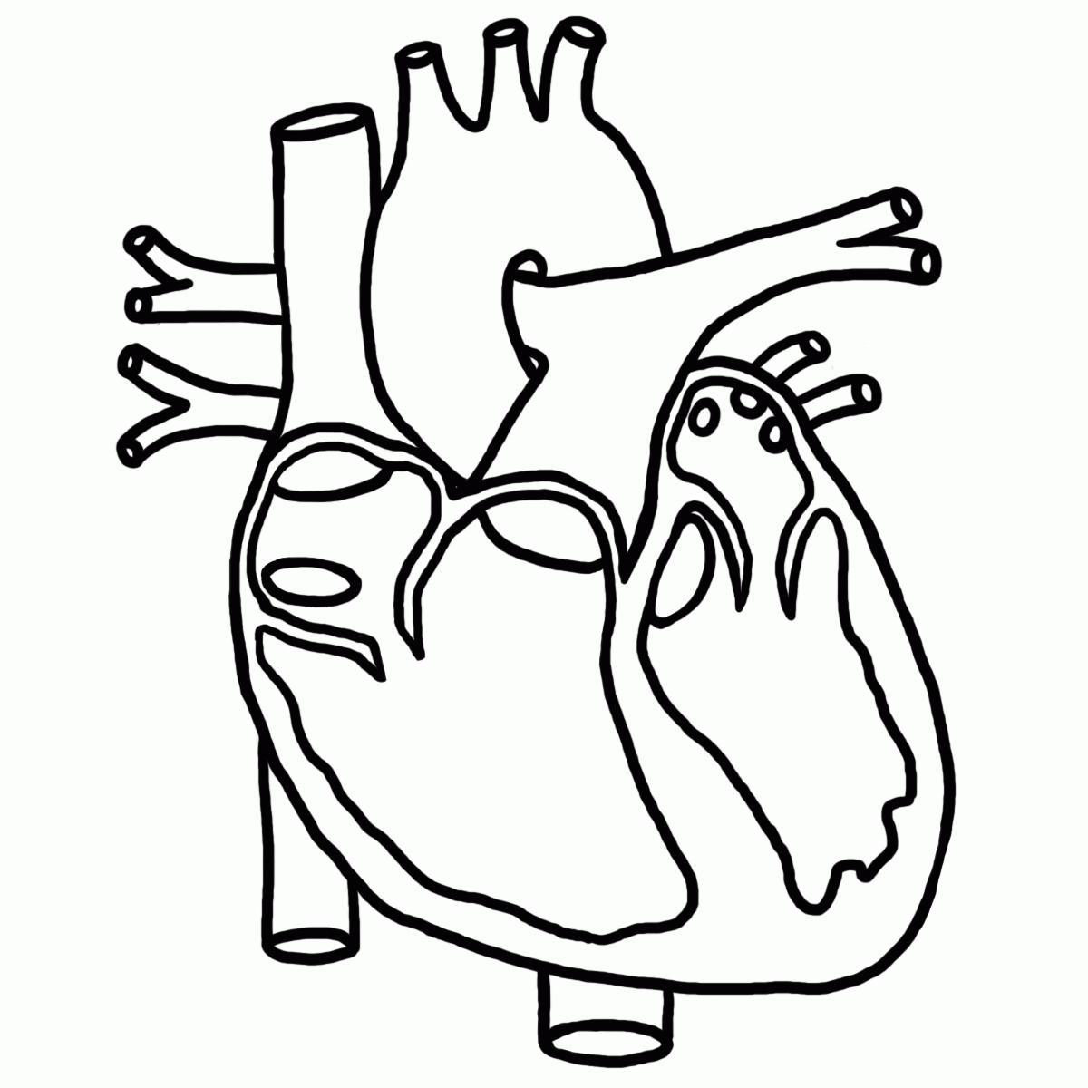 1200x1200 Anatomical Heart Coloring Pages Astounding Human Heart Coloring