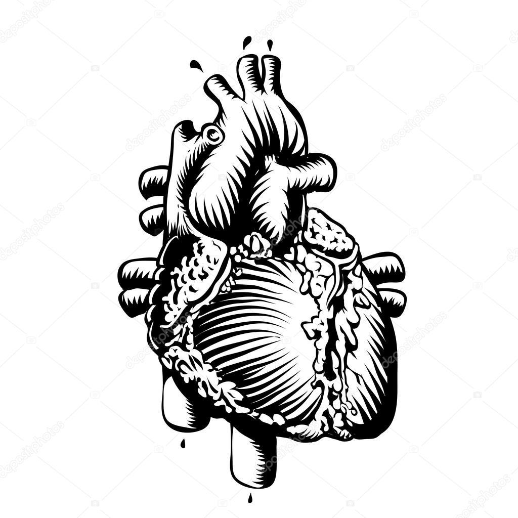 1024x1024 Anatomy Heart Stock Vector Vectorguru