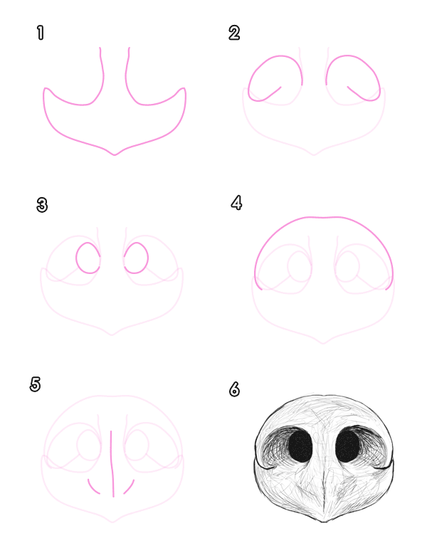 600x770 How To Draw Animals Bears And Pandas, And Their Anatomy