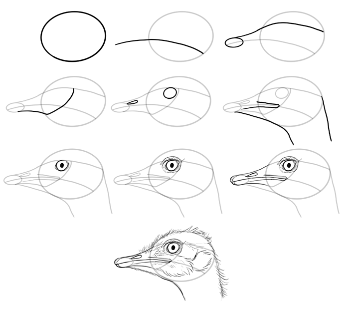 700x641 How To Draw Birds Step By Step Instructions