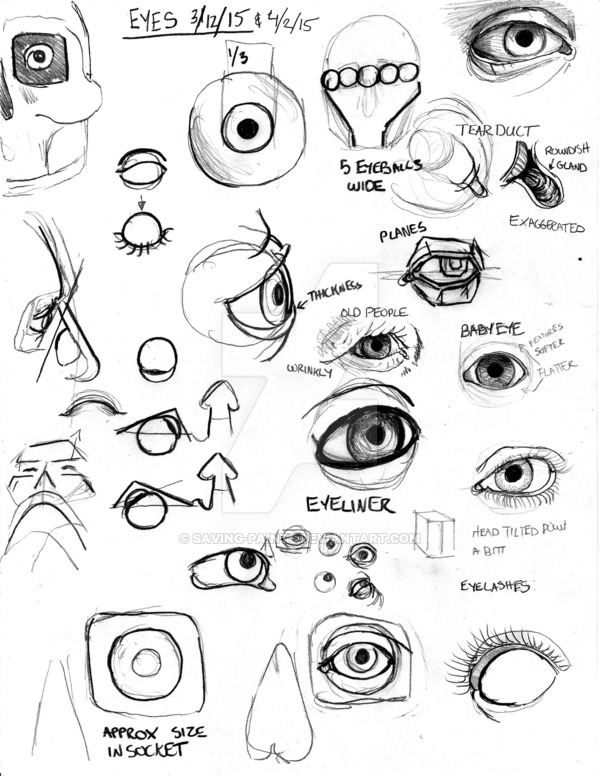 600x776 Anatomy Eye 040215 By Saving Paints