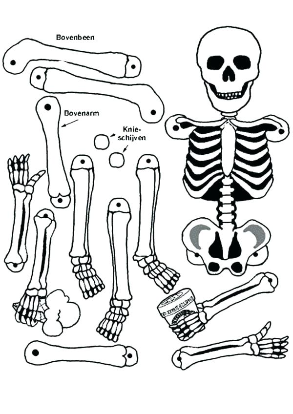 600x848 Anatomy Of A Bone Coloring Anatomy Skull Anatomy Bone Coloring