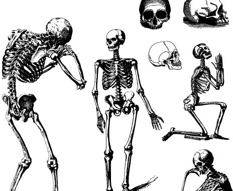 464x380 Vector Skeleton For Free Download About (37) Vector Skeleton. Sort