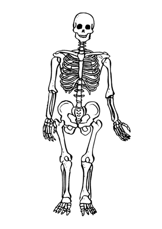 531x750 Coloring Page Skeleton