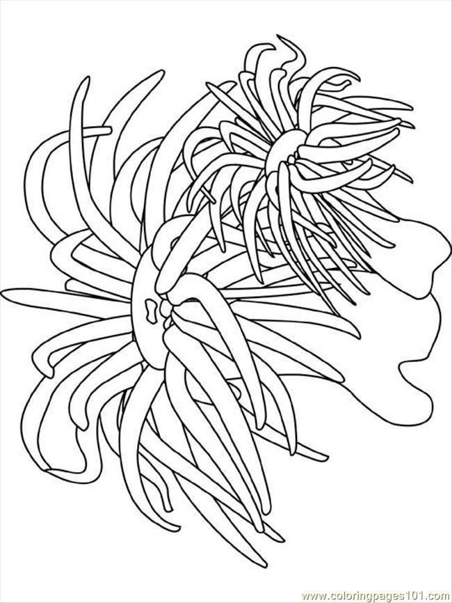 650x866 Ocean Coloring Pages Coloring Pages Sea Anemone (Natural World