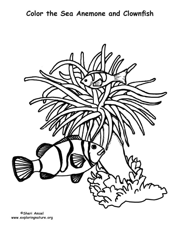 612x792 Sea Anemone Coloring Page Sea Anemone Coloring Sheet
