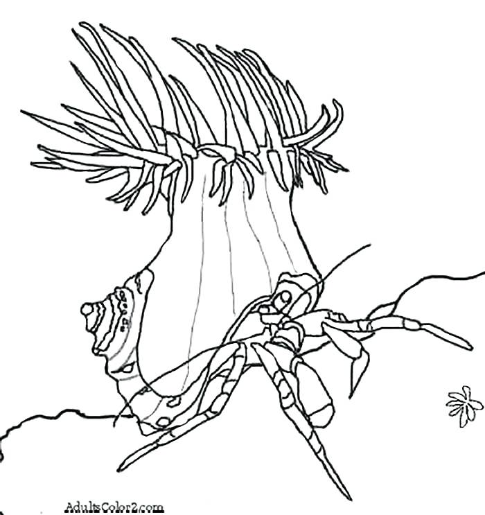 700x743 Sea Anemone Coloring Page Joandco.co