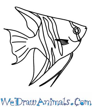300x350 How To Draw An Angelfish