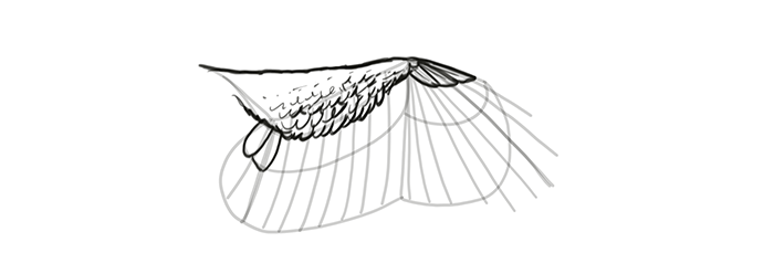 700x248 How To Draw And Animate Wings Birds, Bats, And More