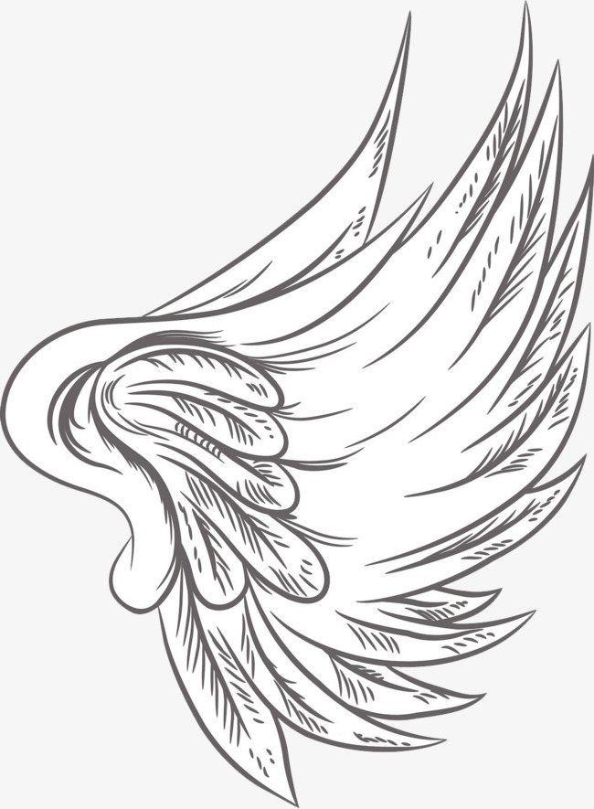 650x885 Single Feather Wings, Feather, Wing, Angel Png Image And Clipart