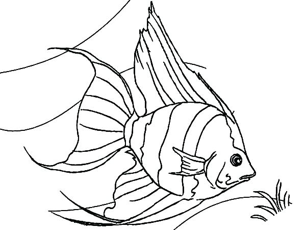 600x450 Coloring Page Fish Goldfish In The Fish Tank Coloring Page