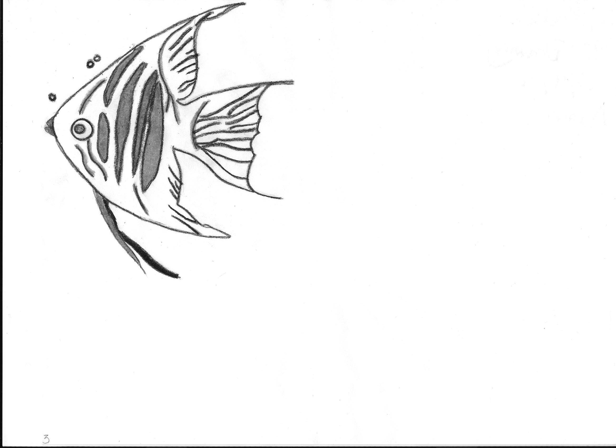 2338x1700 Drawn Angelfish Anime