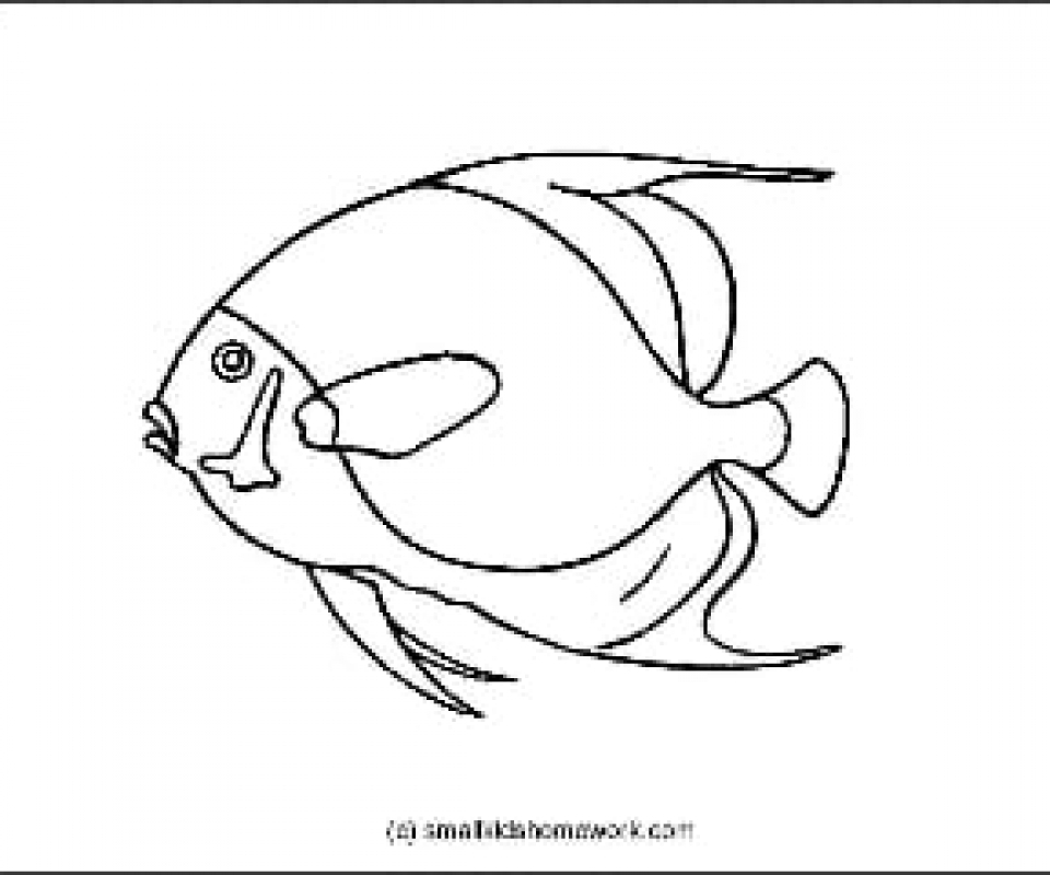 960x800 French Angelfish Outline Picture For Coloring.