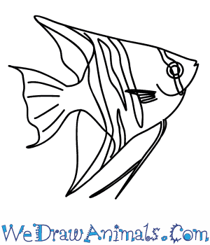300x350 How To Draw An Angelfish