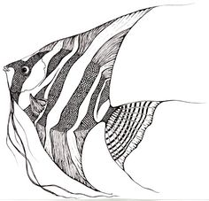 236x227 How To Draw Angelfish Step By Step