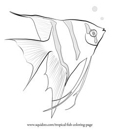 236x269 How To Draw Angelfish Step By Step